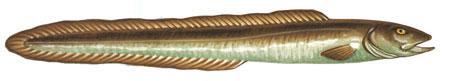 Крупная Рыба