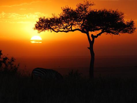 охота в африке